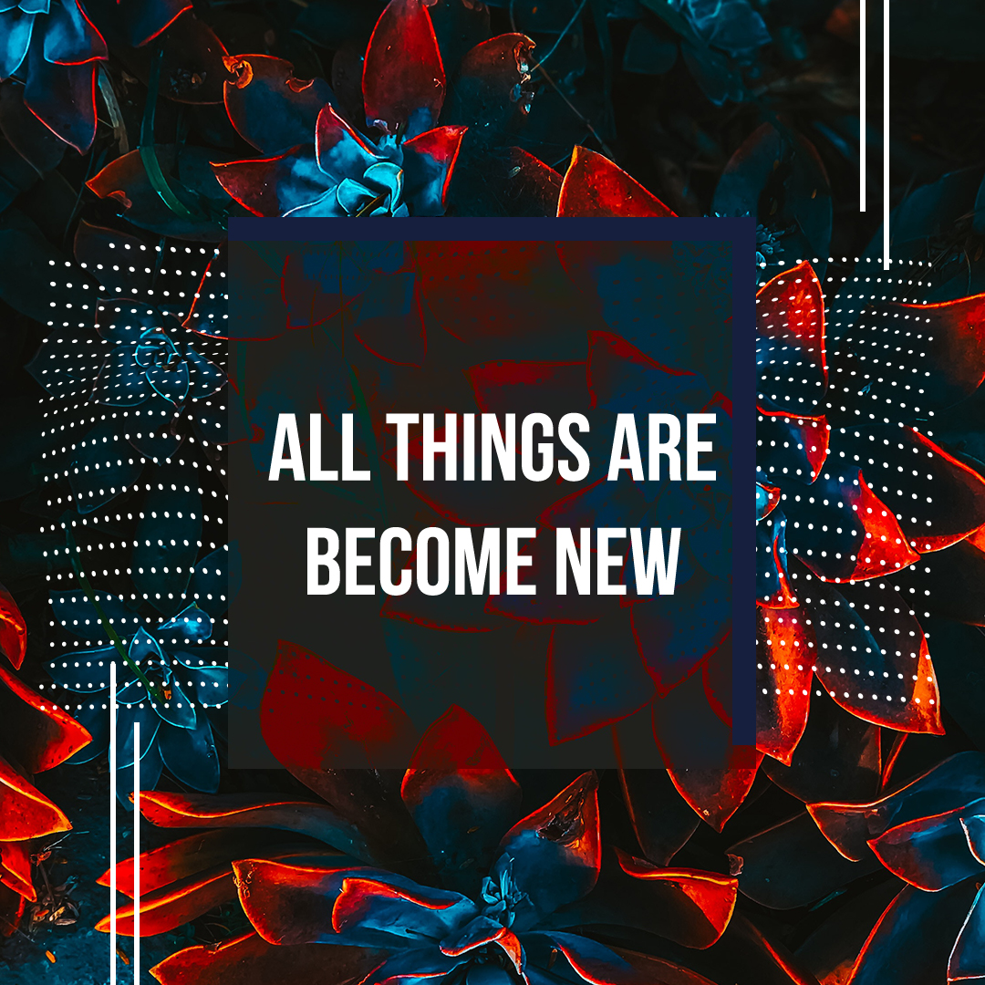 Become New